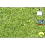Viehweide mit Maulwurfshügeln, Frühherbst, 31x50cm