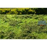 Wiese mit Gebüsch Frühling/Low bushes Spring 29x19
