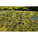 Wiese mit Gebüsch Spätsommer/Low bushes late 29x19