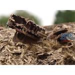 Verrottende Blätter / Leave rotting 1/35