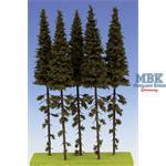 Fichten / Spruce w/ Trunk 23-27 cm Hochstamm 5x