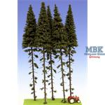 Fichten / Spruce w/ Trunk 28-32 cm Hochstamm 5x