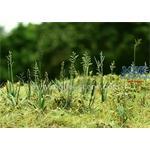 Wiesen-Schwingel / Meadow  1/35