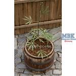 Hanfpflanze / Cannabis  1/35