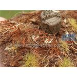 Vertrockneter Farn / Dry Fern 1/35