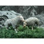 2 Schaafe, set of 2 sheeps 1:35