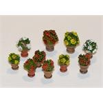 Flowers in flowerpots