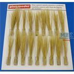 Tufts reeds-dry  / Reetgras - Trocken