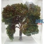 Apfelbaum, ca.20cm, Frühherbst