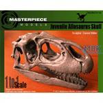 Juvenile Allosaurus skull/ Allosaurus Schädel 1:1