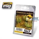 Riedgras - common sedge