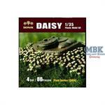 Margeriten - Daisys