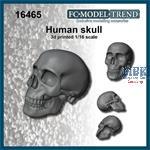 Human skull / Totenschädel 1:16
