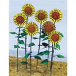 Sun Flower - Sonnenblumen