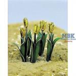 Tulip - Tulpen