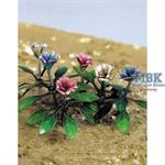 Carnation - Nelken