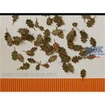 Eiche extra farben Herbst / Oak leaves autumn 1/35