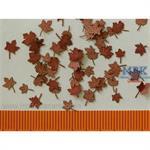 Ahorn Blätter Trocken /  Maple leaves dry 1/35