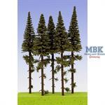 Fichten / Spruce w/ Trunk 14-16cm Hochstamm 5x