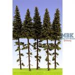 Fichten / Spruce w/ Trunk 18-22 cm Hochstamm 5x