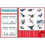 PIGEONS - TAUBEN