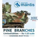 Pine branches / Tannenzweige