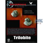 Trilobit /  trilobite 1:1
