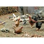 Hühner, Hahn und Hasen  insgesamt 7 Tiere 1:35