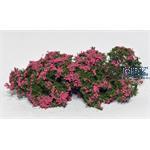 Flowering shrubs pink / Blühende Büsche rosa