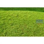 Frühlingswiese gemäht/ Cut meadow spring 29x19