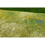 Spätsommerwiese gemäht/ Cut meadow lt summer 29x19