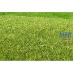 Moor Feuchtgebiet mittel /Wetland middle 29x19