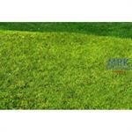Frühlingswiese ungemäht/ Meadow spring 29x19