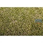Klee blühend/ Clover blooming 29x19