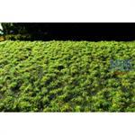 Rasensode klein Frühling / Small turfs spring