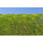 Blühende Frühlingswiese/ Blooming meadow spring