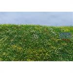 Blühende Frühsommerwiese/ Blooming meadow summer