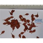 Roteichen Blätter Herbst/  Northern red oak autumn