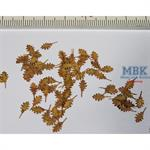 Roteichen Blätter trocken/  Northern red oak dry