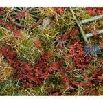 Verrottende Blätter / Leave rotting (Ahorn/ Maple)