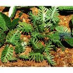 Dschungelplanzen 1/ Jungle set 1 1/35