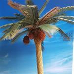 Date Palm set
