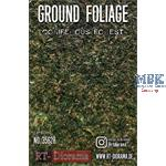 Ground Foliage: Coniferous forest