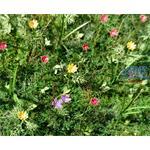 Wiesenblumen / Meadow flowers 1/35