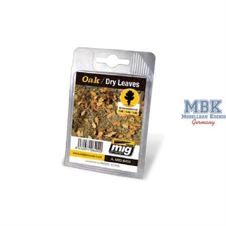 Oak Dry Leaves