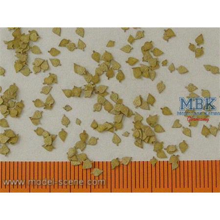 Birkenblätter Trocken / Birch leaves dry 1/35