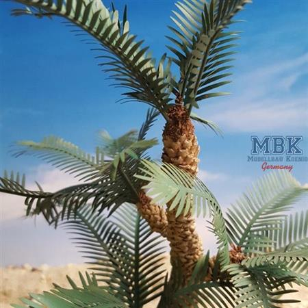 Cycad Palm