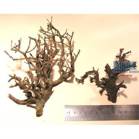 Natural Bonsai Tree Branches - Bäume