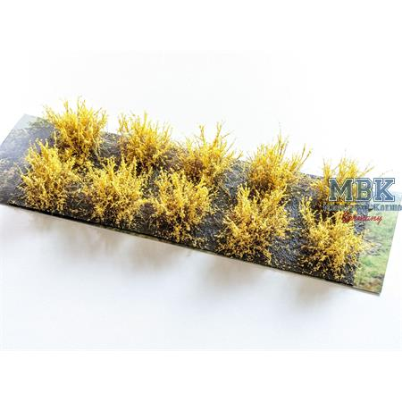 Büsche Ginster 2-3 cm broom