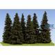 Fichte / Spruce 90-110mm